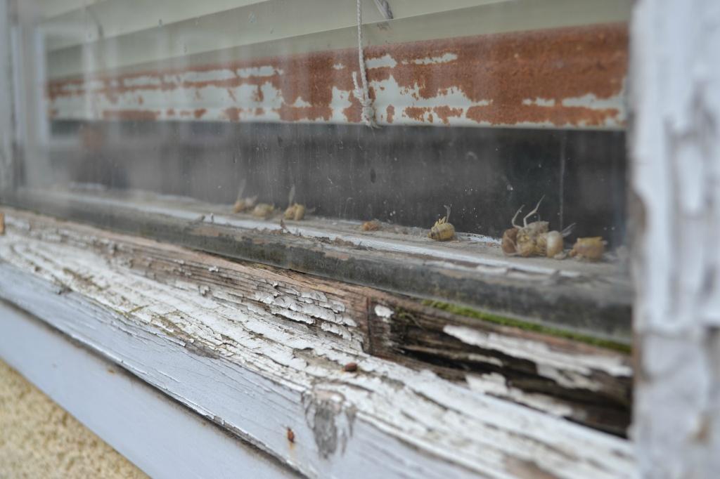 elkorhadt ablak